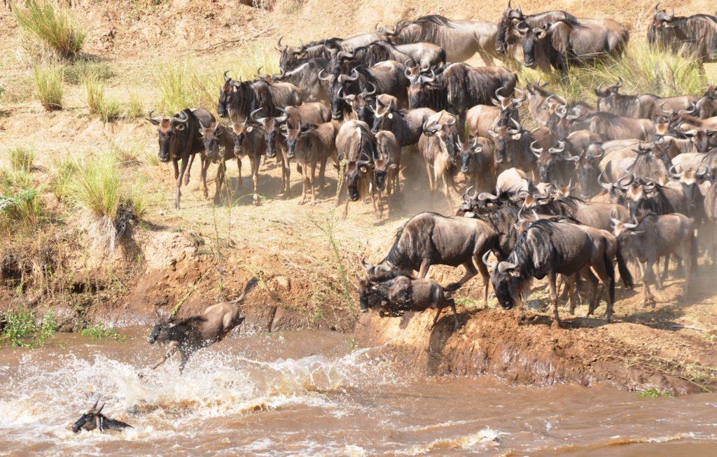 Kenya safari tours, Masai Mara