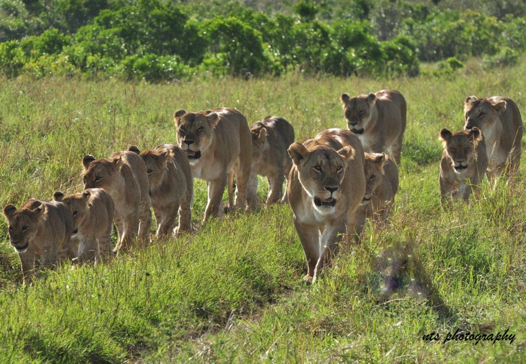 ספארי קמפינג בקניה