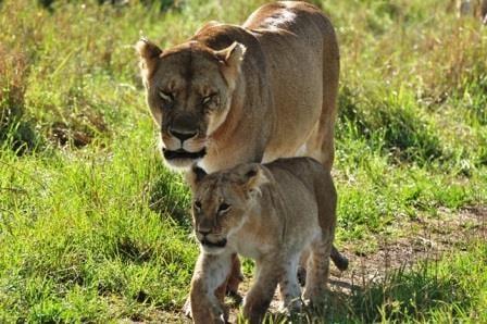 Kenya camping safaris