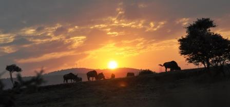 https://naturaltracksafaris.com/kenya-safari/
