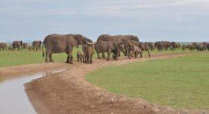 safari in Amboseli