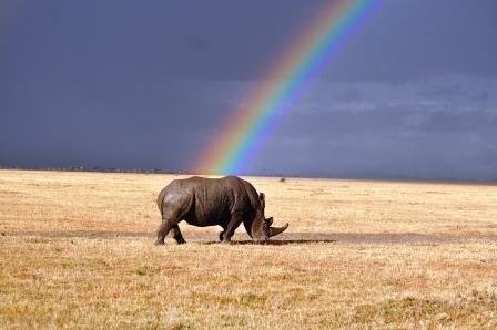 Kenya safari holidays
